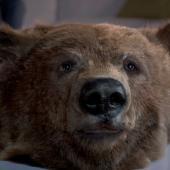 """Canal+ """"The Bear"""" (2011)"""